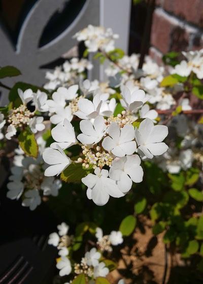 花のきれいな季節