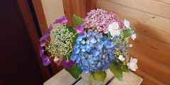 紫陽花いろいろ