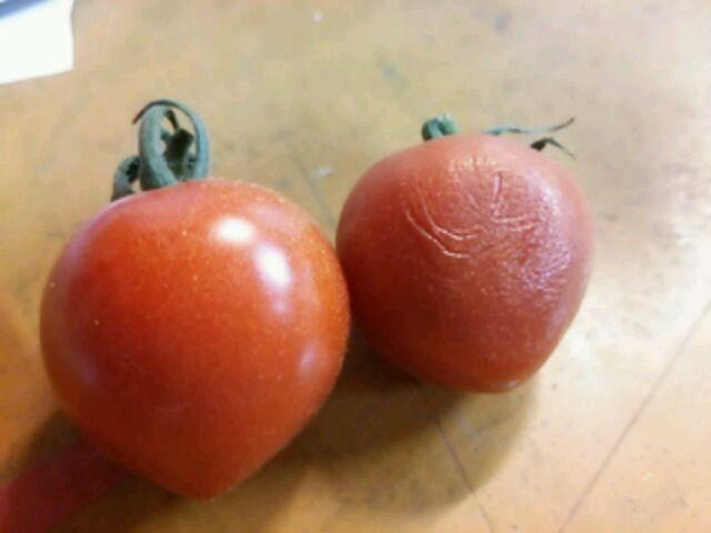しわしわ ミニ トマト