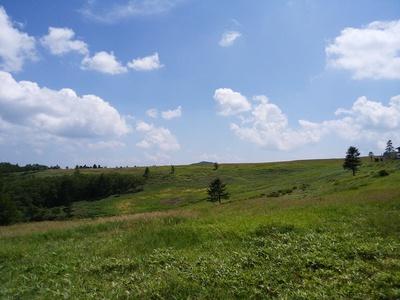 美ヶ原の空の青とアザミ