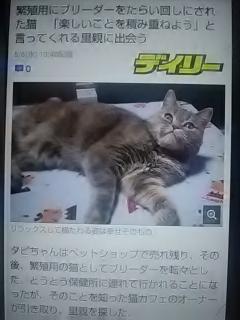 猫 売れ残り ペット 里親 ショップ