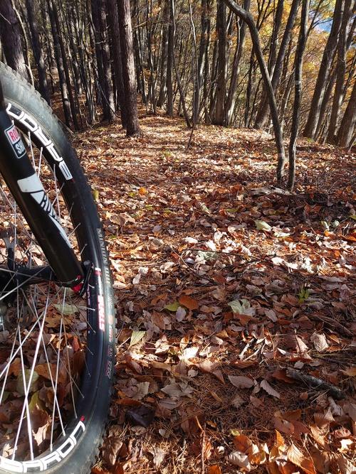 【落ち葉の季節に】 オークリー プリズムトレイル