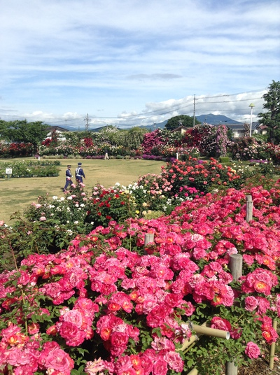 中野一本木公園サイクリング
